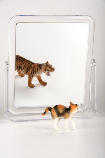 Cat identity Animal Brave Cat Identity Mismatch Little Cat, Animal, Brave, Front Of The Mirror, Identity Mismatch, Mirror, Tiger Mirror, Mirror Tiger Time