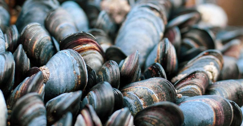 Full frame shot of many mussels