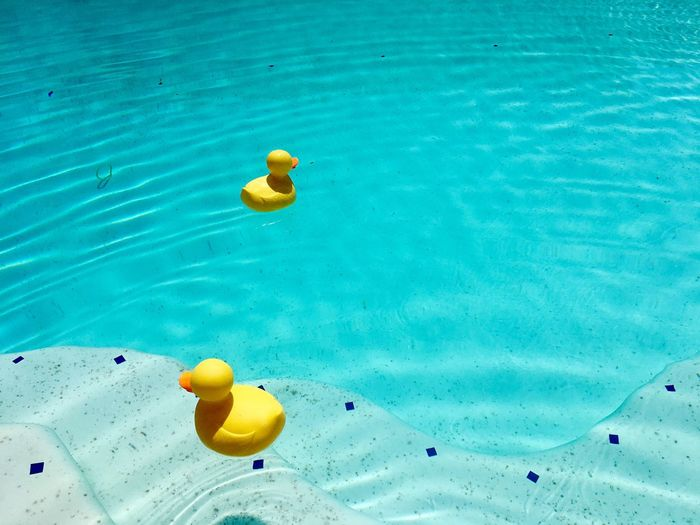 Rubber duckies in pool Water Swimming Pool High Angle View Yellow Day No People Outdoors Floating On Water Blue Rubber Duck Rubber Duck Project Rubber Ducky Rubber Duckies Breathing Space The Week On EyeEm Paint The Town Yellow Paint The Town Yellow California Dreamin