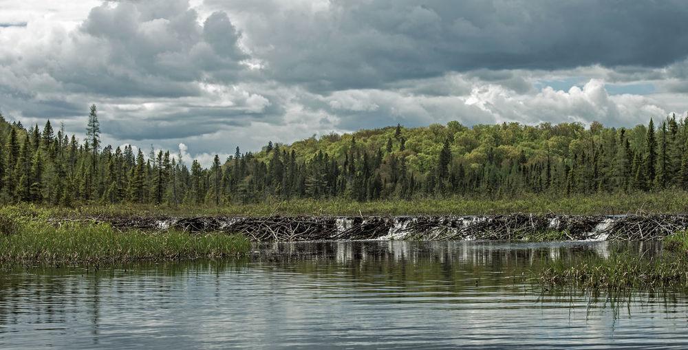 Beaver dam Dam