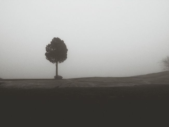One of MANY Fog shots I got yesterday and the night before. Mobilephotography EyeEm Ambassador EyeEm Best Shots