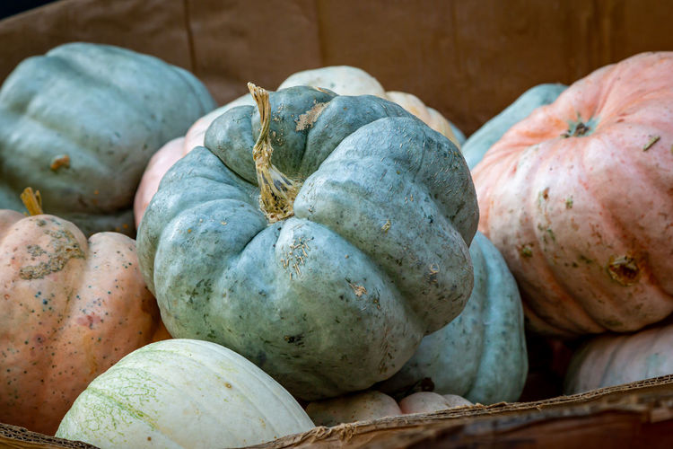 Close-up of pumpkins for sale in market