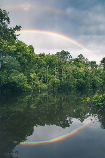 Beautiful double rainbow after a torrential afternoon shower in the Amazon Rainforest in Peru. Truly cleansing. Amazon Amazonia Cloud - Sky Double Rainbow Double Rainbows Forest Lake Landscape Nature No People Outdoors Peru Peru Traveling Peruvian Rain Rainbow Rainforest Reflection Reflection Reflections Scenics Sky Space Tree Water