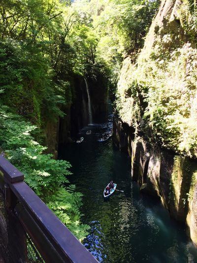 River Japan Miyazaki Plant Water Tree Nature Growth Day River