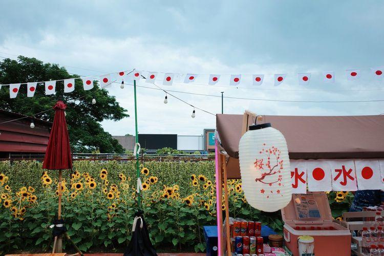 Various flowers hanging on building against sky