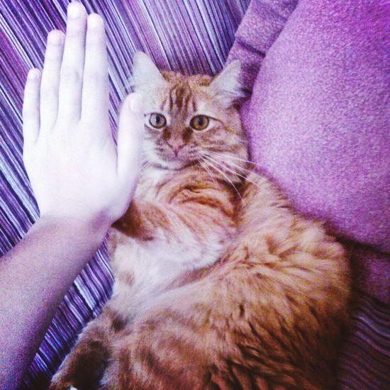 Hi) My Favorite  Cat♡ Animal Love , Meow🐱