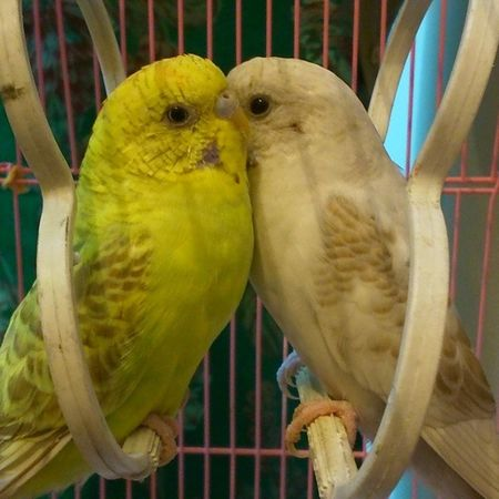 Forced to do so ;-) Nofilter Lovebirds Home Dharamshala