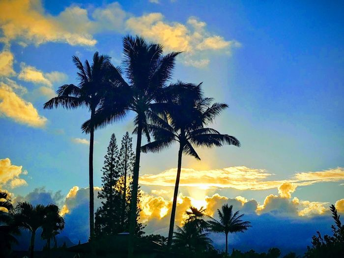 spectacular Cloud Speak In Front Of Me Communication No Filter Look Up Cloud Convo Vibrant Color Cloud Show No People Home Do You See What I See? Epic Tree Palm Tree Sunset Blue Silhouette Tree Trunk Tree Area Dramatic Sky Sky Cloud - Sky Treetop Power In Nature Long Shadow - Shadow
