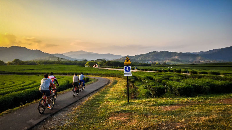 Ride a bicycle in beautiful tea plantation at Singha Park. Chiang Rai, Thailand. Chiang Rai, Thailand Tea Activity Bicycle Cycling Environment Grass Group Of People Landscape Leisure Activity Men Motion Mountain Mountain Range Nature Outdoors People Plantation Riding Road Scenics - Nature Sky Sport Transportation Travel