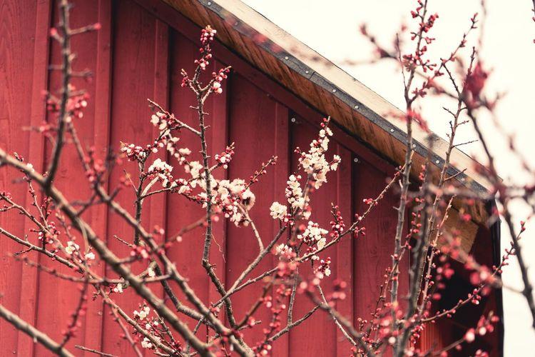 Springtime in