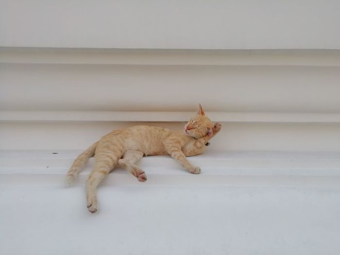 Side view of a cat lying on wall