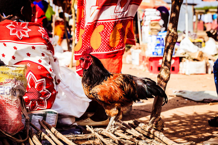 Chicken Kenya Market Poultry Red Tanzania Africa Africa Travel Backgrounds Close-up Colorful Farming Food For Sale Maasai Maasai Market Market Stall Meat People Pretty World Market Yellow Business Stories An Eye For Travel EyeEmNewHere An Eye For Travel EyeEmNewHere
