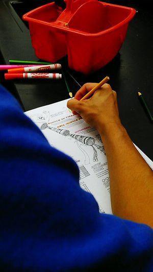 Everyday Education Anatomy