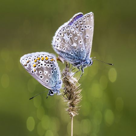Invertebrate Insect Animal Wing Animal Themes Animal Wildlife Animal Beauty In Nature Animals In The Wild Flower Plant Butterfly - Insect Nature Close-up One Animal Flowering Plant Focus On Foreground Vulnerability  Butterfly Fragility No People Pollination