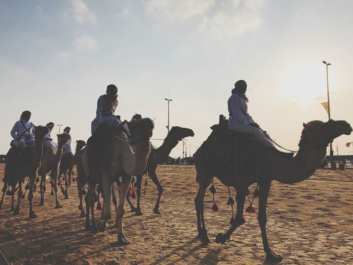 Travelers and camels Travel Destinations Camel Sky Domestic Animals Mammal Domestic Group Of Animals Group Of People Animal Wildlife Pets Horse Livestock Real People Vertebrate Land Nature Cloud - Sky Lifestyles Leisure Activity Men Outdoors Riding