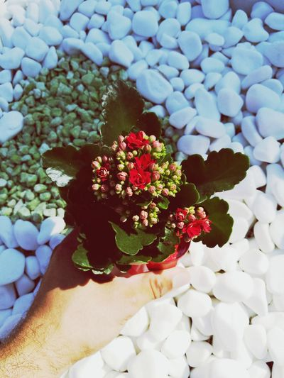 Un fiorellino per mia madre. Flower Freshness Beauty In Nature Fragility Human Hand Human Body Part One Person Plant Close-up Outdoors Day Nature People Adult Flower Head Adults Only One Man Only Only Men First Eyeem Photo