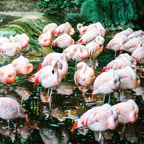 Flamingos relaxing in lake