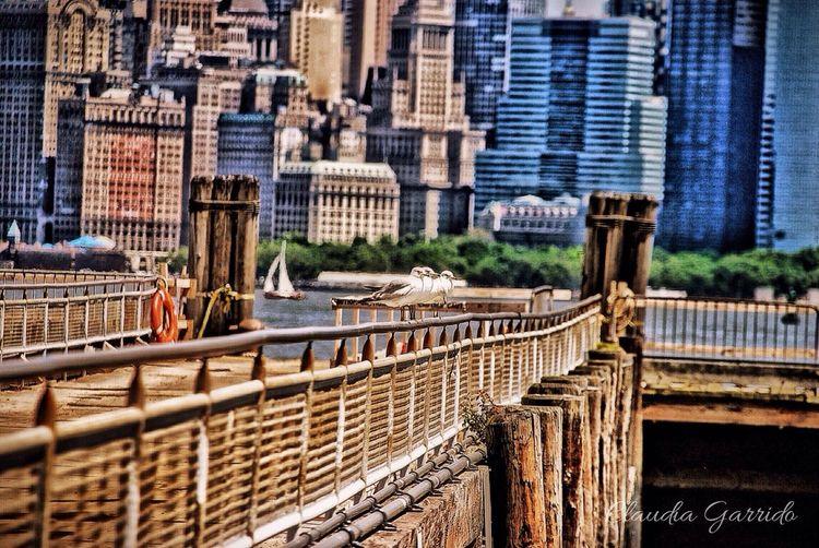 Newyork Enjoying Life Hanging Out