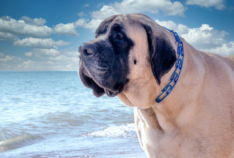 Dog looking at sea against sky