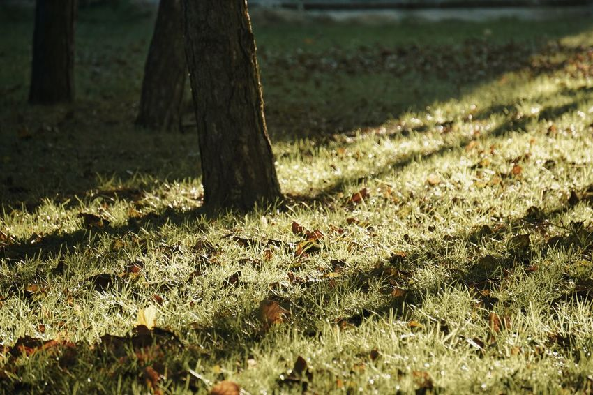Trees Light And Shadow Shadow Growth Green Color Green No People Tree Trunk Tree Sunlight Grass Close-up Grass Area Growing Blade Of Grass Long Shadow - Shadow Focus On Shadow
