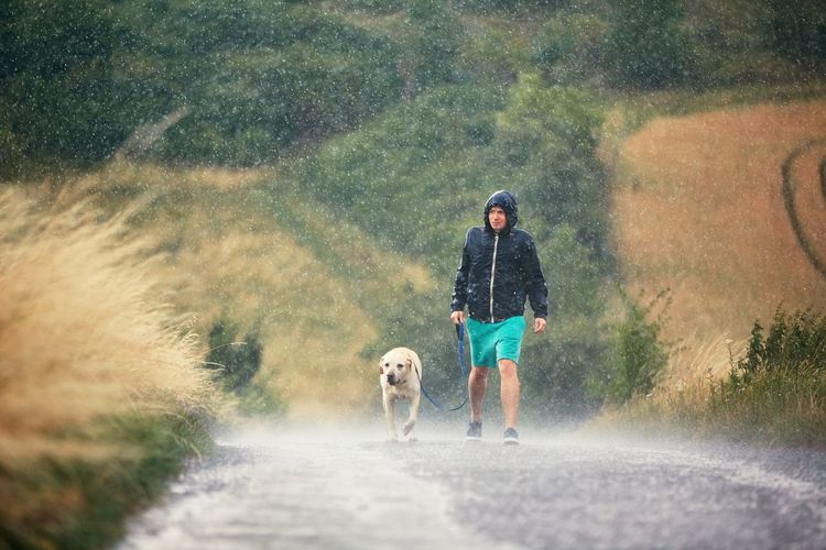 Man walking with dog on road during rainy season