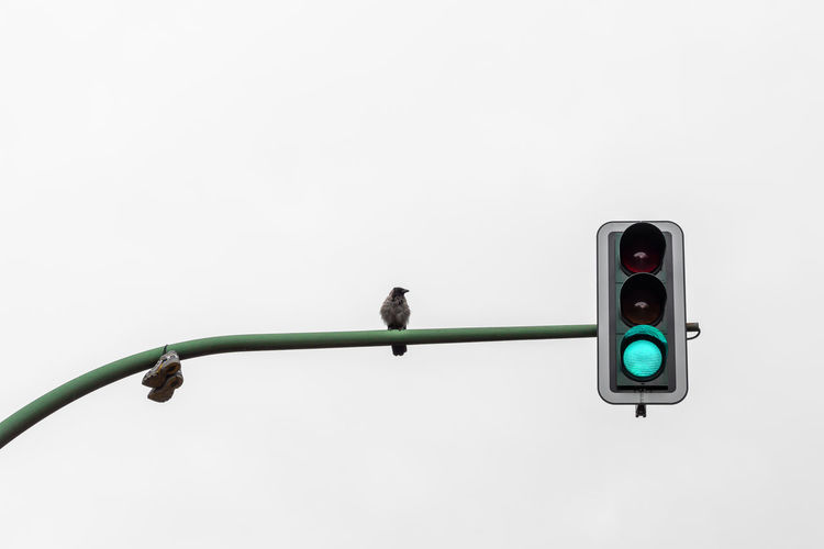 Low angle view of bird perching on traffic signal against clear sky