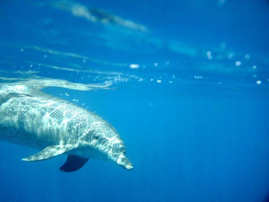 Delfine Blue Like The Ozean Unterwasserwelt Ozean Delphin Delphins Delphiniums