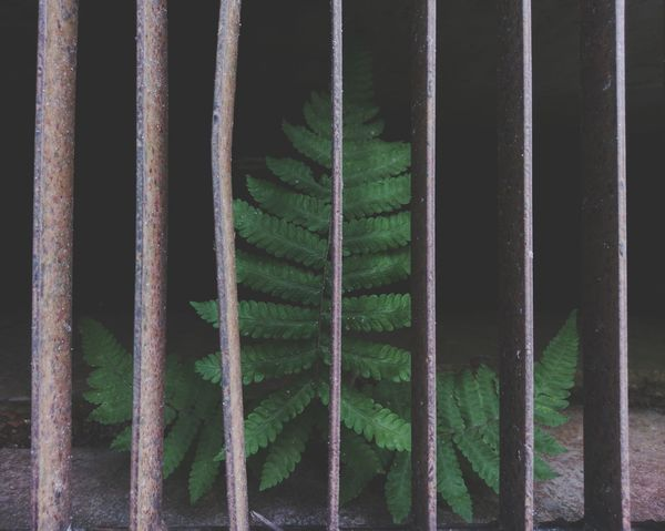 Under the cage Tree Life Little Tree Metal Background Texture Green Life Of Trees Living Thins Close-up Green Color Cage Grid Structure Young Plant Woods Greenery Countryside