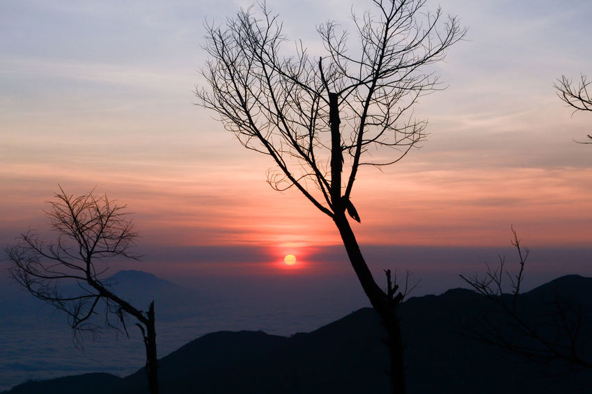 Mount of Sikunir. Tree Sunrise Landscape WoodLand Silhouette Mountain Beauty In Nature Sun Cloud - Sky Natural Parkland Nature Sky Landscape_photography Landscape Photography Beauty Silhouette Vacations Nature Beauty In Nature Landscapephotography Landscaper Landscape_Collection INDONESIA Outdoors Day Perspectives On Nature