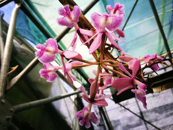Orchidflower Orchidee Orchid Flower Flower Pink Color Fragility Beauty In Nature No People Growth Nature Petal Flower Head Close-up Freshness Low Angle View Orchid