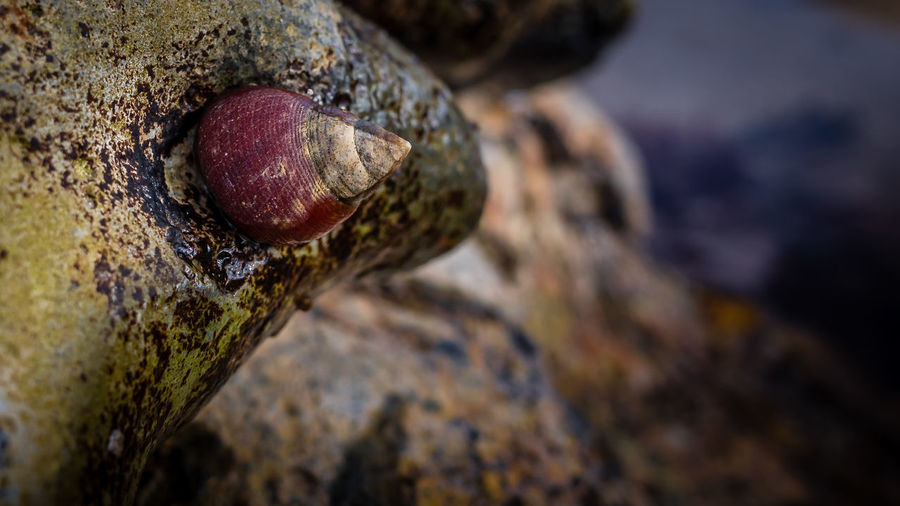 Close-up of shell on tree trunk