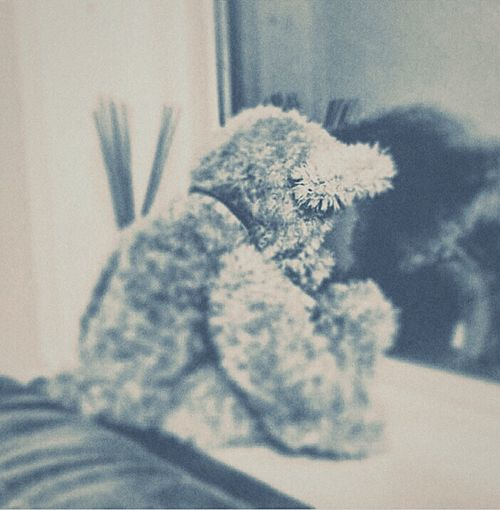 Sitting in my window sill like FML!!....... Indoors  One Animal Animal Themes Domestic Animals Mammal Close-up Pets Focus On Foreground Relaxation Wool Animal Head  Animal Hair At Home No People Hairy  stuffed bear heartbroken i ca Cant Wait Till I Get A Real Camera Lol..... Sitting And Pouting...filter On Top Of Filter Through Hope Ppl Like It hope people like it?????