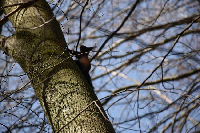 Squirrel In The Forest At A Lake Find The Animal