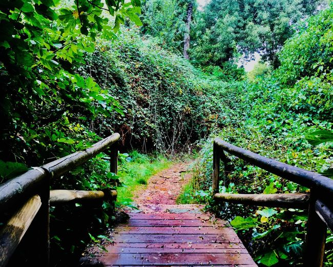 Railing No People Plant Nature Day Staircase A New Beginning Green Color Steps And Staircases The Way Forward Direction Growth Outdoors High Angle View Footpath Architecture Connection Bridge Built Structure Tree Land First Eyeem Photo