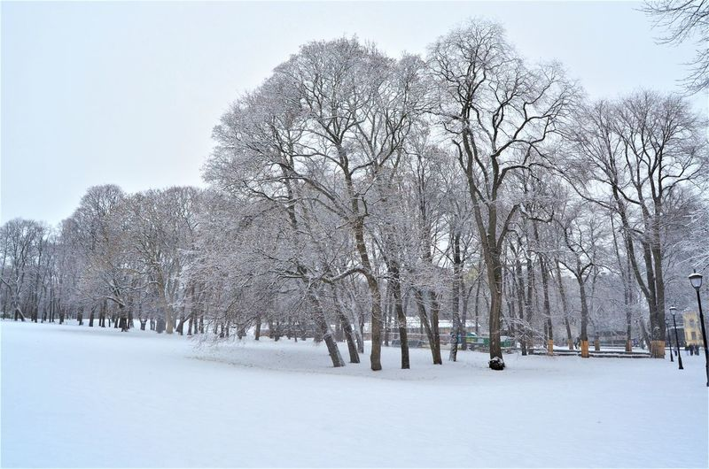 Snow Tree Winter Cold Temperature Plant Bare Tree Nature Land White Color Field Day Covering Sky Beauty In Nature Scenics - Nature Tranquility Tranquil Scene No People Branch Outdoors Snowing Oslo Oslo, Norway