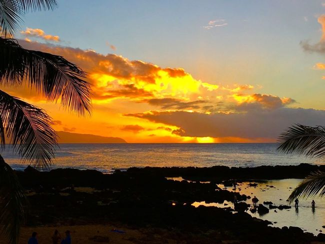 Perspectives On Nature Sunset Sea Beach Beauty In Nature Water Scenics Sky Nature Silhouette Tranquility Tranquil Scene Palm Tree Idyllic Horizon Over Water Cloud - Sky Outdoors Tree Sun No People Holiday Live Life Beauty In Nature Oahu, Hawaii