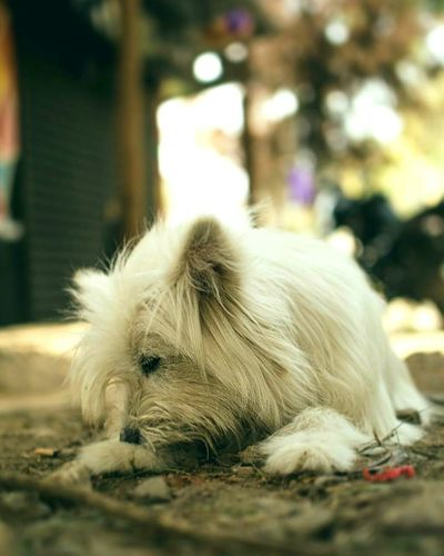 One Animal Animal Themes Outdoors Close-up No People Dog Closeup Nikonphotography Day Clueless Travel Morning Travel Destinations