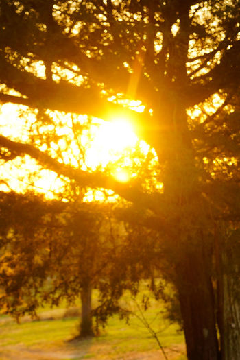 Nature Sunlight Tree Forest Beauty In Nature Beauty Vibrant Color Yellow Sun Sunset Sunbeam Summer Gold Colored Scenics Illuminated Non-urban Scene Multi Colored Environment Tranquil Scene Abstract