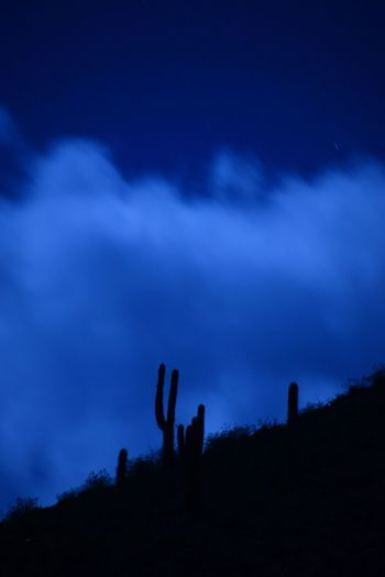 Cactus emerged by the full moon, San Antonio de los Cobres, Salta, Argentine Beauty In Nature Human Body Part Nature Night Outdoors People Real People Scenics Silhouette Sky Togetherness Tranquility