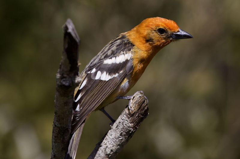 One Animal Animal Themes Animal Wildlife Animals In The Wild Bird Animal Vertebrate Perching Focus On Foreground Close-up No People Day Nature Plant Outdoors Twig Beauty In Nature Robin Tree Side View
