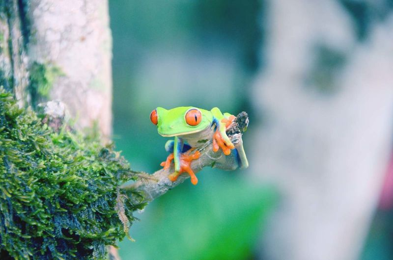 Close-up of tree frog looking away
