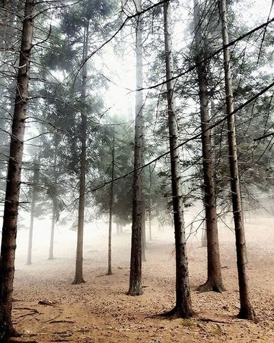 Nella Nebbia come se fossimo nel film Shining Montagna Pini Fog Cuneo Ig_cuneo Ig_cuneo_ Loves_cuneo Landscape Landscape_lovers Landscapes Forest @ig_piemonte @ig_cuneo Piemonte Trees Nature Naturelovers Nature_perfection