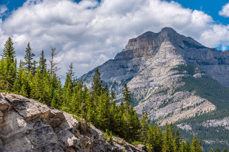 Mountain Cloud - Sky Mountain Range Tree Sky Scenics - Nature Beauty In Nature Nature Plant Environment Land Pine Tree Landscape Rock Coniferous Tree Forest Day Tranquil Scene Wilderness No People Outdoors Pine Woodland Mountain Peak Formation