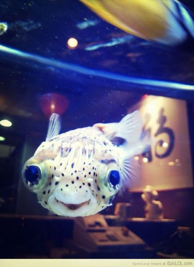 Happiest Fish In The World (: