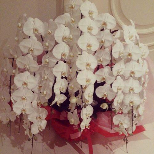 見事な胡蝶蘭。胡蝶蘭が一番好き。Whiteday