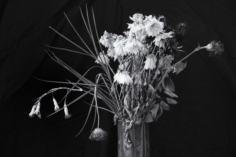 Beauty In Nature Blackandwhite Death Decay Drooping Flowers Flower Fragility Melancholy Monochrome Nature Plant Transient Wilted Flower