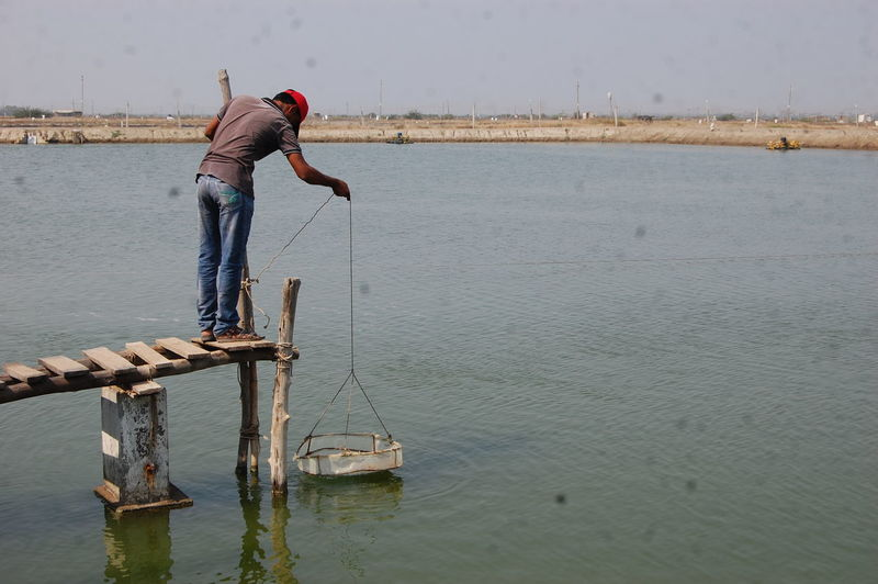 Fisherman Using Aquaculture Technique For Fish Farming