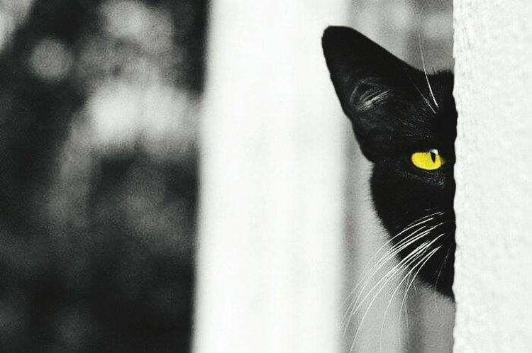 Black Cat Photography Black Cat Is Just So Beautiful.