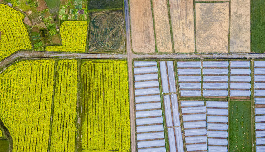 High angle view of multi colored agricultural field