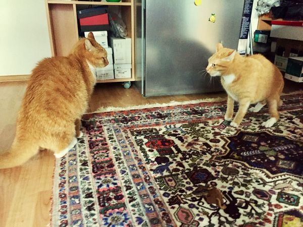 Catch The Moment Cats Of EyeEm Two Cats On The Floor 3XSPUnity Katzenfotografie Catlife New Perspective